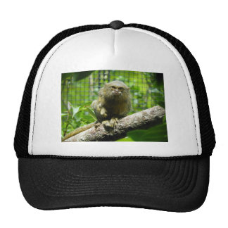 Pygmy Marmoset Trucker Hat
