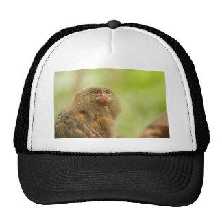 Pygmy Marmosets Trucker Hat