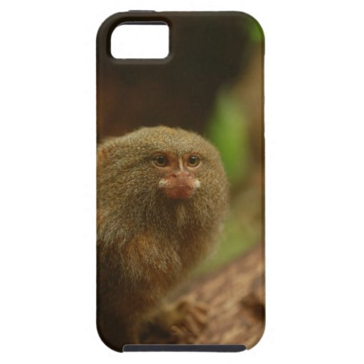 Pygmy Marmosets iPhone 5 Cover