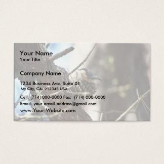 Pygmy Nuthatch Business Card