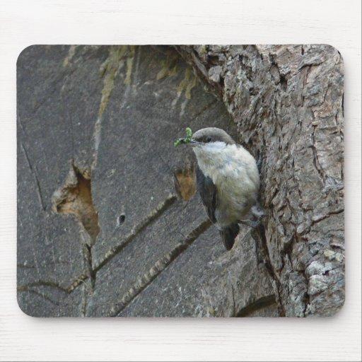 Pygmy nuthatch mouse pad