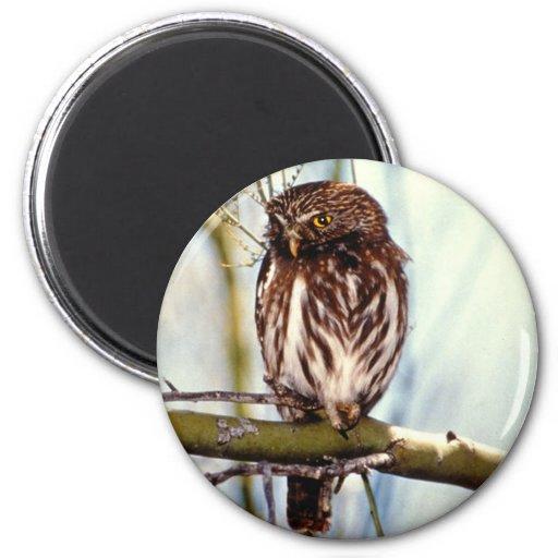 Pygmy Owl 2 Inch Round Magnet