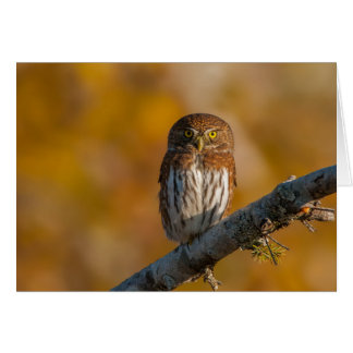 Pygmy Owl against fall colors Card