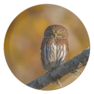 Pygmy Owl against fall colors Dinner Plate