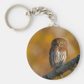 Pygmy Owl against fall colors Keychain