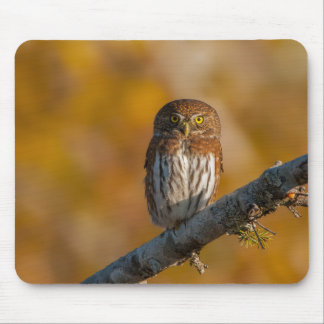 Pygmy Owl against fall colors Mouse Pad