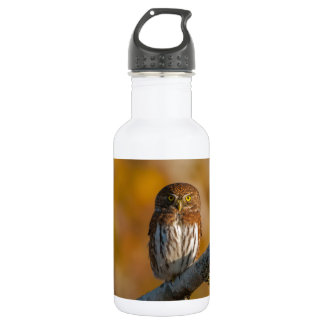 Pygmy Owl against fall colors Stainless Steel Water Bottle
