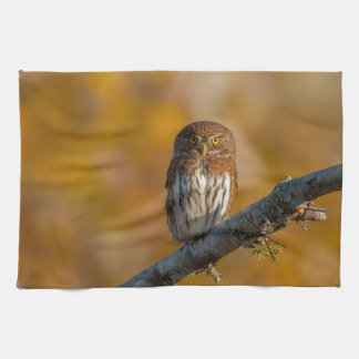 Pygmy Owl against fall colors Towels