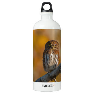 Pygmy Owl against fall colors Water Bottle