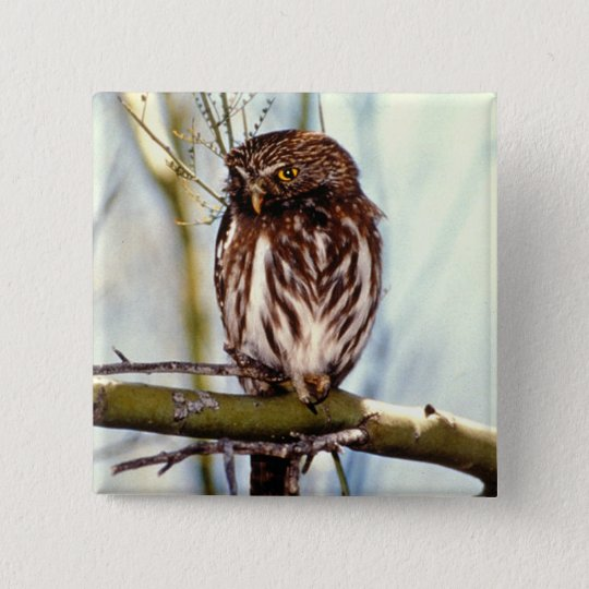 Pygmy Owl Button