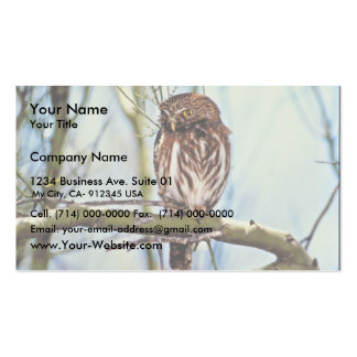 Pygmy Owl Double-Sided Standard Business Cards (Pack Of 100)
