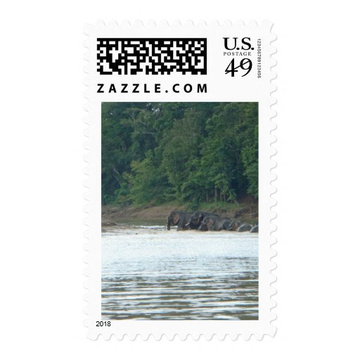 Pygmy Paddle Postage Stamps