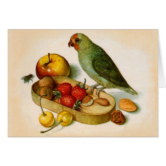 Pygmy Parrot With Fruit and Nuts Card