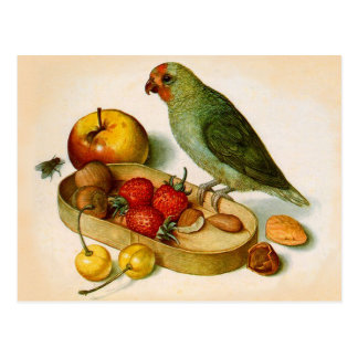 Pygmy Parrot With Fruit and Nuts Postcard