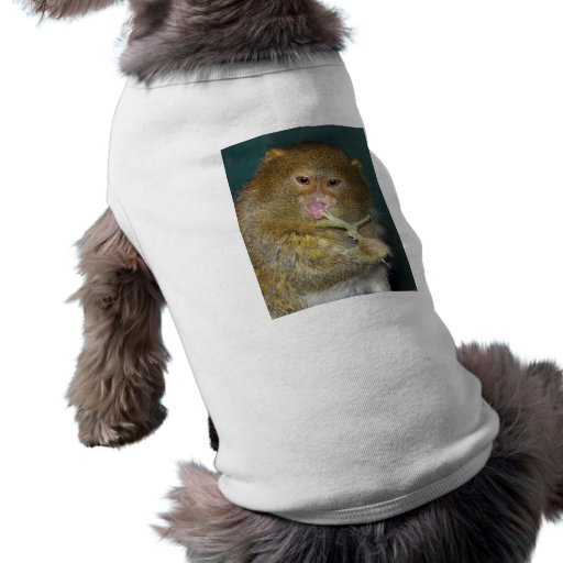 PygmyMarmoset9x12 Camiseta De Mascota