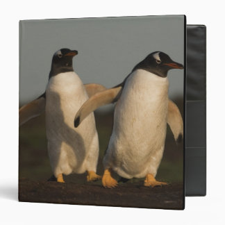 Pygoscelis Papua de los pingüinos de Gentoo) en el