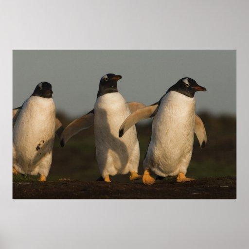 Pygoscelis Papua de los pingüinos de Gentoo) en el Impresiones