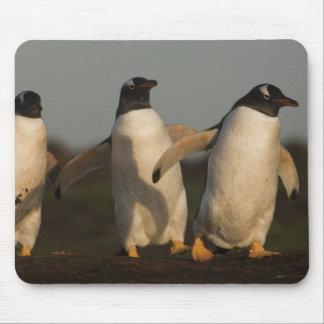 Pygoscelis Papua de los pingüinos de Gentoo) en el Alfombrillas De Ratón