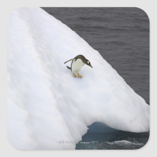 Pygoscelis Papua del pingüino de Gentoo) que se Pegatina Cuadrada
