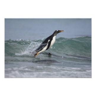 Pygoscelis Papua del pingüino de Gentoo) que viene Arte Con Fotos