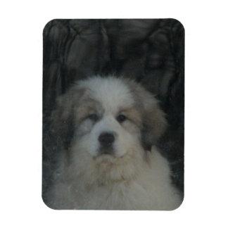 Pyr Puppy Magnet