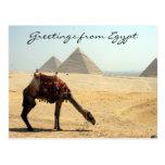 pyramid camel greetings post card