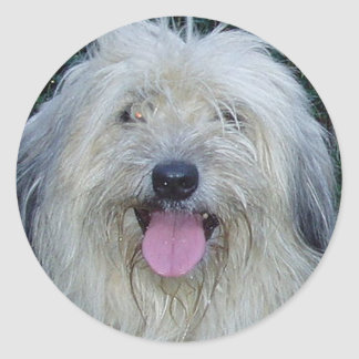 pyrenean shepherd.png classic round sticker