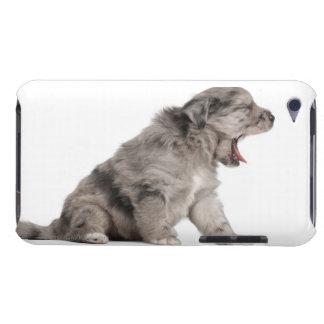 Pyrenean Shepherd puppy (4 weeks) yawning iPod Case-Mate Case