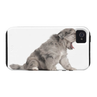 Pyrenean Shepherd puppy (4 weeks) yawning Case-Mate iPhone 4 Case