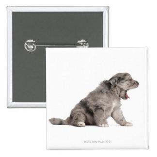 Pyrenean Shepherd puppy (4 weeks) yawning Pinback Button