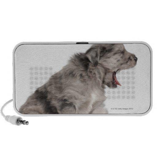 Pyrenean Shepherd puppy (4 weeks) yawning Notebook Speakers