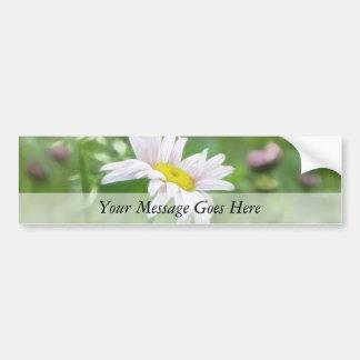 Pyrethrum Daisies -  Tanacetum coccineum Bumper Sticker
