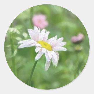 Pyrethrum Daisies -  Tanacetum coccineum Classic Round Sticker