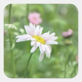 Pyrethrum Daisies -  Tanacetum coccineum Square Sticker