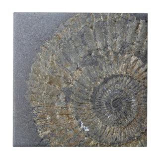 Pyritized Ammonite Ceramic Tile