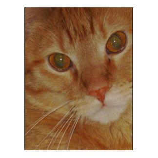 Pyro Kitty Postcard