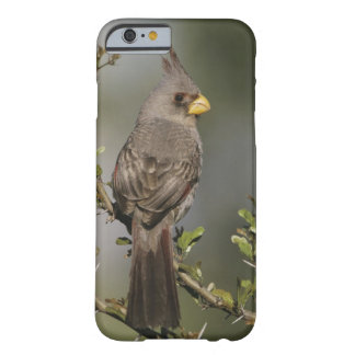 Pyrrhuloxia, Cardinalis sinuatus, female, Starr Barely There iPhone 6 Case