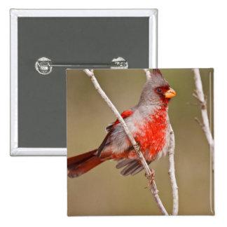 Pyrrhuloxia (Cardinalis sinuatus) male perched 2 Inch Square Button