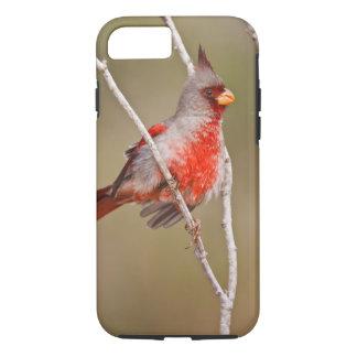 Pyrrhuloxia (Cardinalis sinuatus) male perched iPhone 8/7 Case