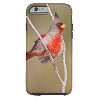 Pyrrhuloxia (Cardinalis sinuatus) male perched Tough iPhone 6 Case