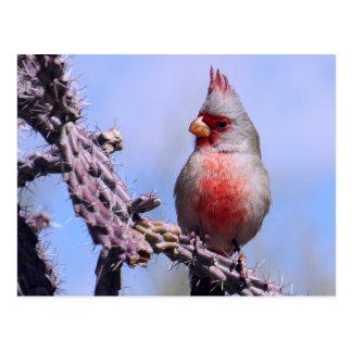 Pyrrhuloxia Desert Cardinal Postcard