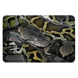 Python molurus bivittatus rectangular photo magnet