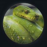 "Python Paper Plate<br><div class=""desc"">python,  snake,  reptile,  green,  animal,  wildlife,  nature,  macro,  drops,  eyes,  love,  modern,  chic,  trendy</div>"