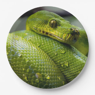 Python Paper Plate