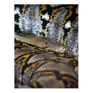 Python photo postcard