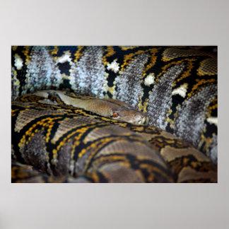 Python photo poster