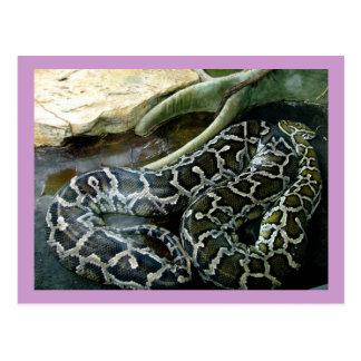 Python Postcard