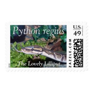 Python Regius Postage