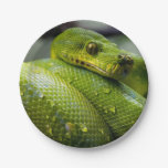 Python Snake Animal Paper Plate