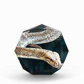 Python Snake Award